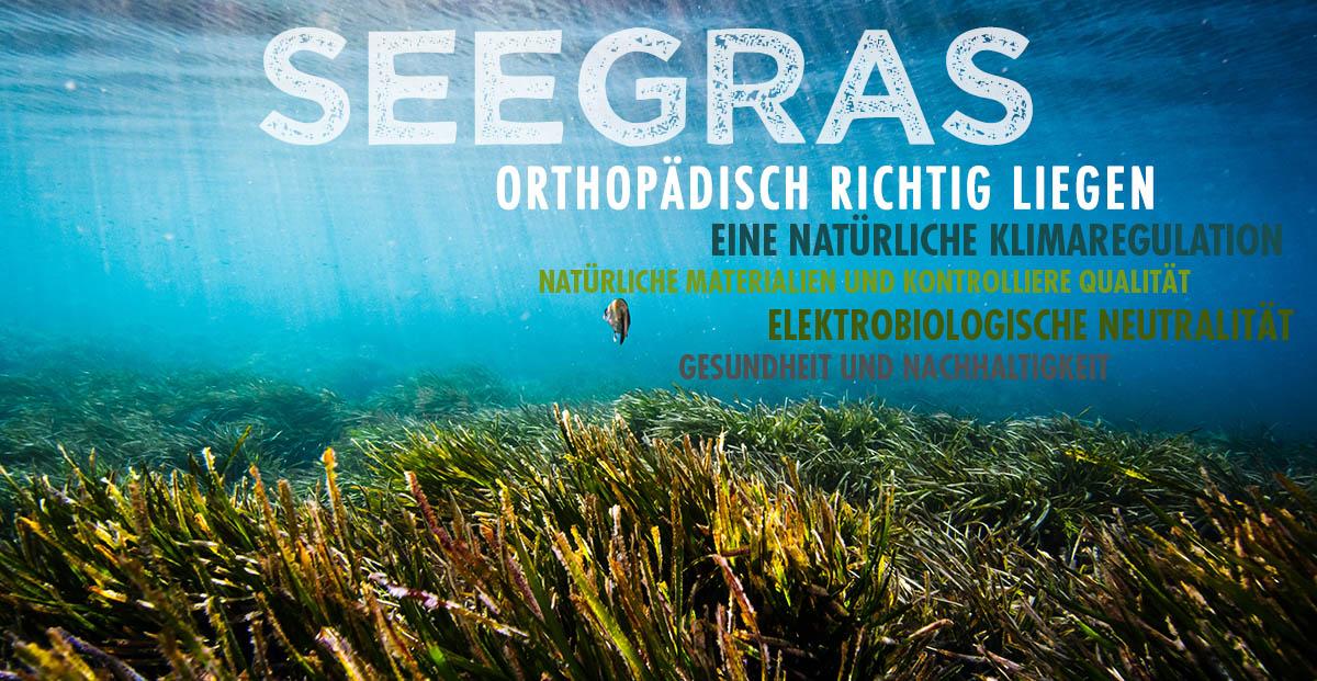 dormiente-Natur-Pur-Seegras-Deluxe-Seegrasmatratze-kaufen